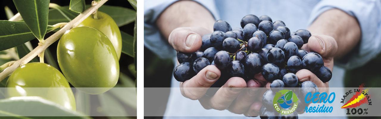 Olivo Slider2 DlBioval - Preservar un oficio noble, el medio natural y la calidad de las cosechas