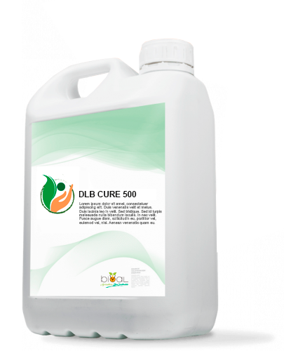 3.DLB CURE 500 - DLB CURE 500